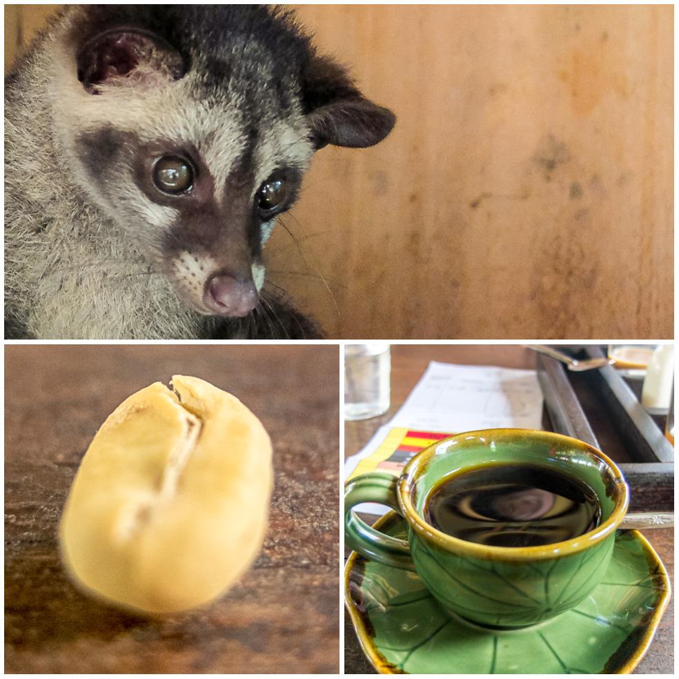 Luwak koffie