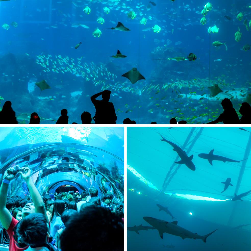 Singapore - SEA Aquarium
