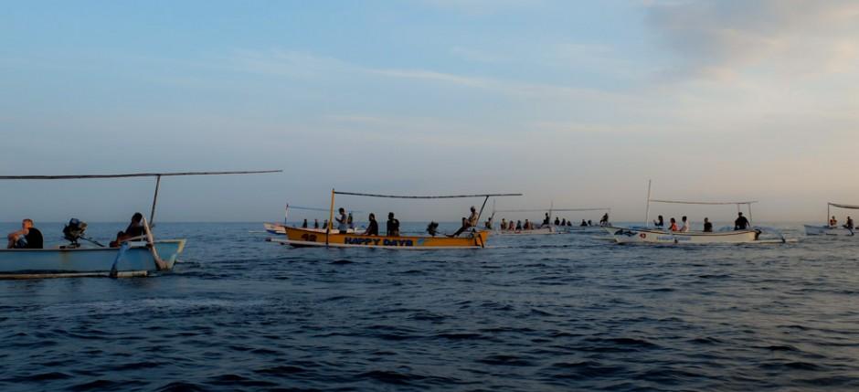 Dolfijn spotten in Lovina